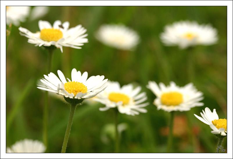 http://florian.coroller.free.fr/pwg/galleries/Nature/botanique/IMG_0053.jpg