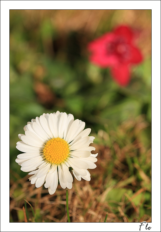 http://florian.coroller.free.fr/pwg/galleries/Nature/botanique/IMG_1298.jpg