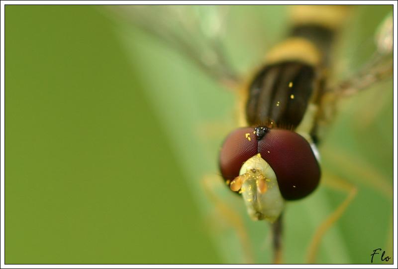 http://florian.coroller.free.fr/pwg/galleries/Nature/zoo/IMG_0965_2.jpg